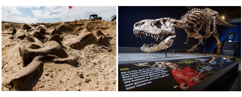 Opgravingen T.Rex Naturalis